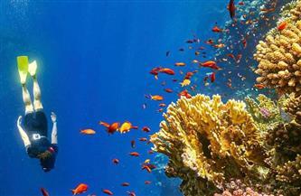 تقرير تشيكي: مصر من أفضل الوجهات السياحية لدى مواطنينا رغم جائحة كورونا