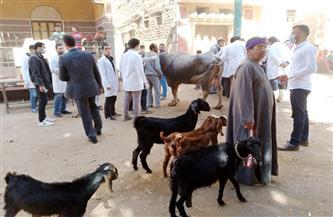 علاج 440 حالة بقافلة بيطرية أسبوعية لجامعة سوهاج بقرية بني زار| صور