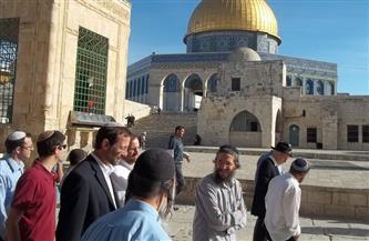 """عشرات المستوطنين يقتحمون """"الأقصى"""" والمنطقة الأثرية بنابلس تحت حراسة قوات الاحتلال"""