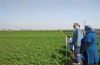 الزراعة تواصل جولاتها الميدانية للاطمئنان على محصولي القمح والفول البلدي  صور
