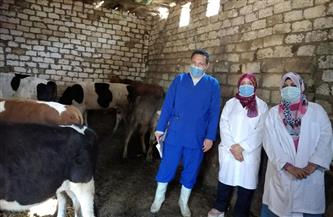 """""""الزراعة"""": 4.5 مليون جرعة لتحصين الماشية ضد الحمى القلاعية والوادي المتصدع"""