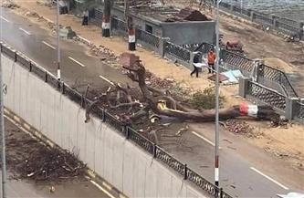 سقوط شجرة كبيرة بكورنيش بنها بسبب الرياح الشديدة