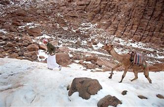 كيف يتغلب بدو سانت كاترين على الصقيع والثلوج؟ | صور