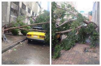سقوط سقف وتحطم سيارة..ماذا فعلت الرياح والعواصف بالإسكندرية | صور