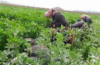 «بوابة الأهرام» تكشف تفاصيل تطبيق منظومة الزراعة التعاقدية بمبادرة «حياة كريمة»