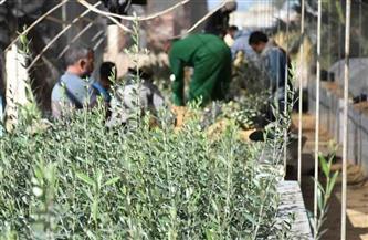 تنمية مطروح المستدامة: توزيع 50 ألف شتلة زيتون و10 آلاف لوز على المزارعين | صور