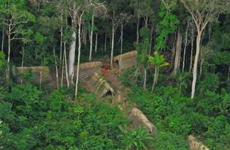 منظمة رجال الغابات تتهم الحكومات باستخدام جائحة كورونا لإتلاف الأدغال