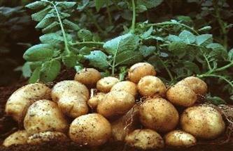 """عمر حسن: زراعة البطاطس في مبادرة """"عايشين بخيرها"""" توفر 30% من استهلاك المياه   فيديو"""