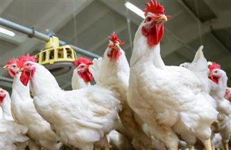 حملة على محلات الدواجن واللحوم في حي الخليفة