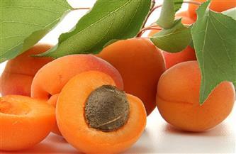 «الزراعة» تصدر توصيات فنية لمزارعي محصول المشمش لمراعاتها خلال فبراير