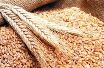 """""""الزراعة"""" تصدر نشرة بالتوصيات الفنية لمزارعي محصول القمح خلال شهر مارس"""