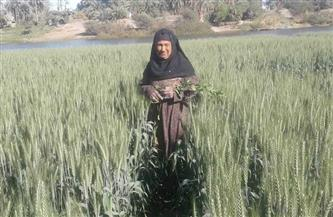 الجدة «غنية» ستينية تعيش على جزيرة نيلية.. تفاصيل الحياة البدائية | صور