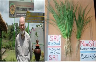 عالم أمريكي: طرق تكثيف الأرز زادت المحصول بنسبة 75%