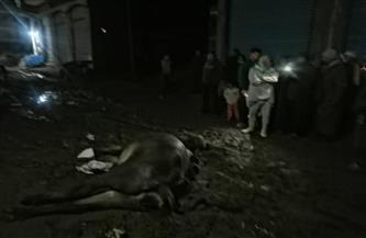 «كهرباء كفر الشيخ» تجري صيانة شاملة لأعمدة الإنارة بعد صعق «ماشية»