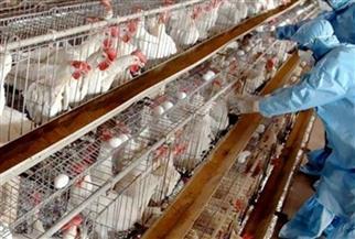 سلالة إنفلونزا الطيور الجديدة بهولندا لا تنتقل إلى البشر إلا بطفرات| فيديو