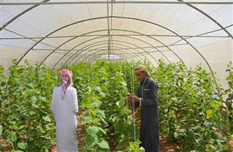 «سيناء» تحت المظلة الخضراء: المشروع القومي لتنمية وسط وشمال المحافظة.. طفرة زراعية توفر الموارد الغذائية
