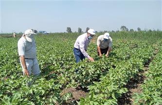"""""""الزراعة التعاقدية""""..""""كلمة السر"""" فى تحقيق الاكتفاء الذاتي.. وأمل الفلاحين فى تسويق المحاصيل"""