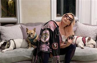 سرقة كلبين لليدي جاجا في هوليوود وإصابة حارسهما.. ونصف مليون دولار لمن يعيدهما