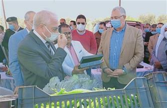 وزير الزراعة يتفقد عددا من المشروعات الزراعية في الطور.. ويشدد على رفع كفاءة الأصول| صور وفيديو