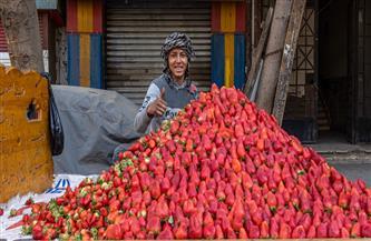 سفيرة النرويج في مصر عن بائعة الفراولة: ظهور أهرامات جديدة في كل مكان | صور