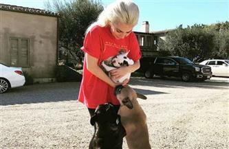 العثور على كلبي المطربة الأمريكية ليدي جاجا