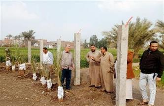إزالة 12 حالة تعد على الأرض الزراعية بالشرقية |صور