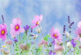يا ورد مين يشتريك؟.. فى«اليوم العالمي للزهور»عطر الطبيعة ينتصر على زمن الكورونا|صور