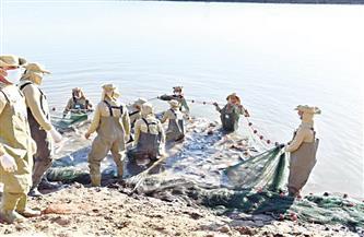 خبراء الثروة السمكية يكشفون لـ «الأهرام التعاونى»: الفيروز طاقة أمل لتنمية منطقة القناة وسيناء