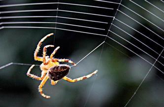 آلاف العناكب السامة تغزو شوارع أستراليا وتجتاح المنازل| فيديو