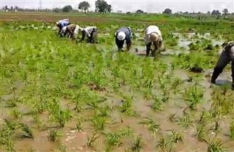 """""""العليا للزراعة والري"""" تناقش مساحات الأرز.. وإعداد أطلس أراضي طرح النهر من شبرا لأسوان"""