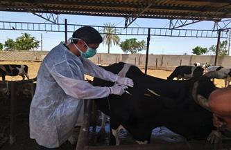 فحص 2659 رأس ماشية ضد البروسيلا والسل البقري في الشرقية