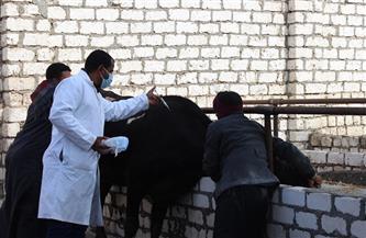 استمرار فعاليات الحملة القومية لتحصين الماشية ضد الحمى القلاعية والوادى المتصدع بالقليوبية