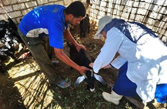 تستهدف 155 ألف رأس.. انطلاق حملة تحصين الماشية بالإسكندرية | صور