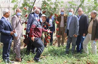 تعاون علمي بين جامعة جنوب الوادي والبحوث الزراعية في تقاوي الطماطم |صور