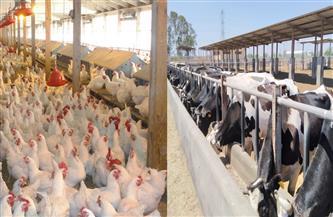 زراعة الغربية: حصر مزارع الإنتاج الحيواني والداجني والترقيم