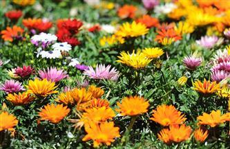 مع التوسع في زراعتها وتصنيعها.. النباتات الطبية والعطرية.. مستقبل التصدير بالصعيد