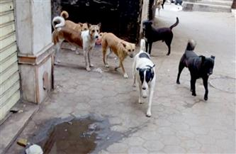 مسئول بالصحة: 330 مركزًا بالمحافظات مجهزة للتعامل مع حالات العقر من الكلاب الضالة