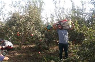سعد موسى: الزراعة تمثل 15% من الناتج المحلي | فيديو