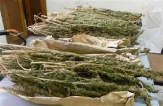 ضبط 10.435 كيلو من مخدر البانجو خلال 48 ساعة