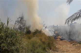 رصد ١٥ حالة  لحرق مخلفات القصب بالأقصر |صور