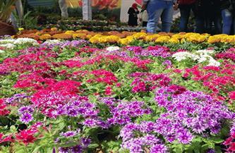 أبرز المعلومات حول حديقة الأورمان النباتية ومعرض زهور الربيع | إنفوجراف