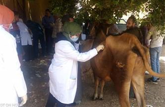 جامعة سوهاج تطلق قافلتها البيطرية المجانية لقرية أولاد عليو |صور