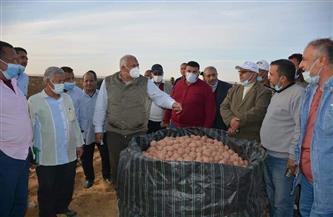 الزملوط يشهد حصاد محصول البطاطس بالفرافرة| صور