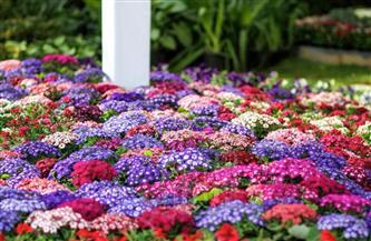 """""""الزراعة"""" تعلن 11 توصية للمؤتمر الأول لمركز المعلومات الصوتية والمرئية للنهوض بصناعة الزهور"""
