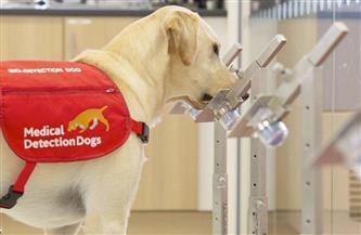 """""""الأمصال واللقاحات البيطرية"""" تكشف تفاصيل استخدام الكلاب في رصد مصابي كورونا"""