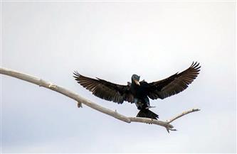 """الطائر """"الشبح"""" يثير الذعر في كولومبيا"""