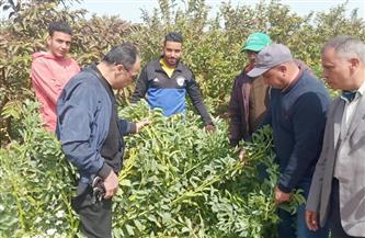 الزراعة: مركز البحوث الزراعية ينظم 11 مدرسة حقلية في 10 محافظات خلال أسبوع  صور