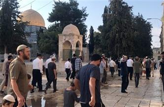 49 جريحًا فلسطينيًا على الأقل في صدامات بين الشرطة الإسرائيلية وفلسطينيين في باحة الأقصى