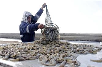 مديرة «المركزى لبحوث الثروة السمكية»: اهتمام الدولة بالبحيرات سيعيدها كثروة قومية