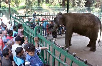130 عامًا على إنشائها.. «حديقة حيوان الجيزة» جوهرة التاج الأعرق في الشرق الأوسط | صور